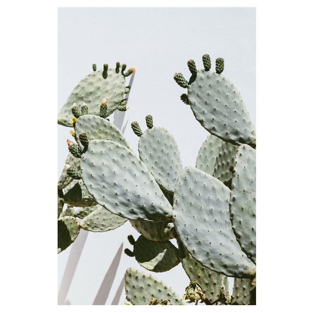 Cactus Opuntia poster David & David Studio