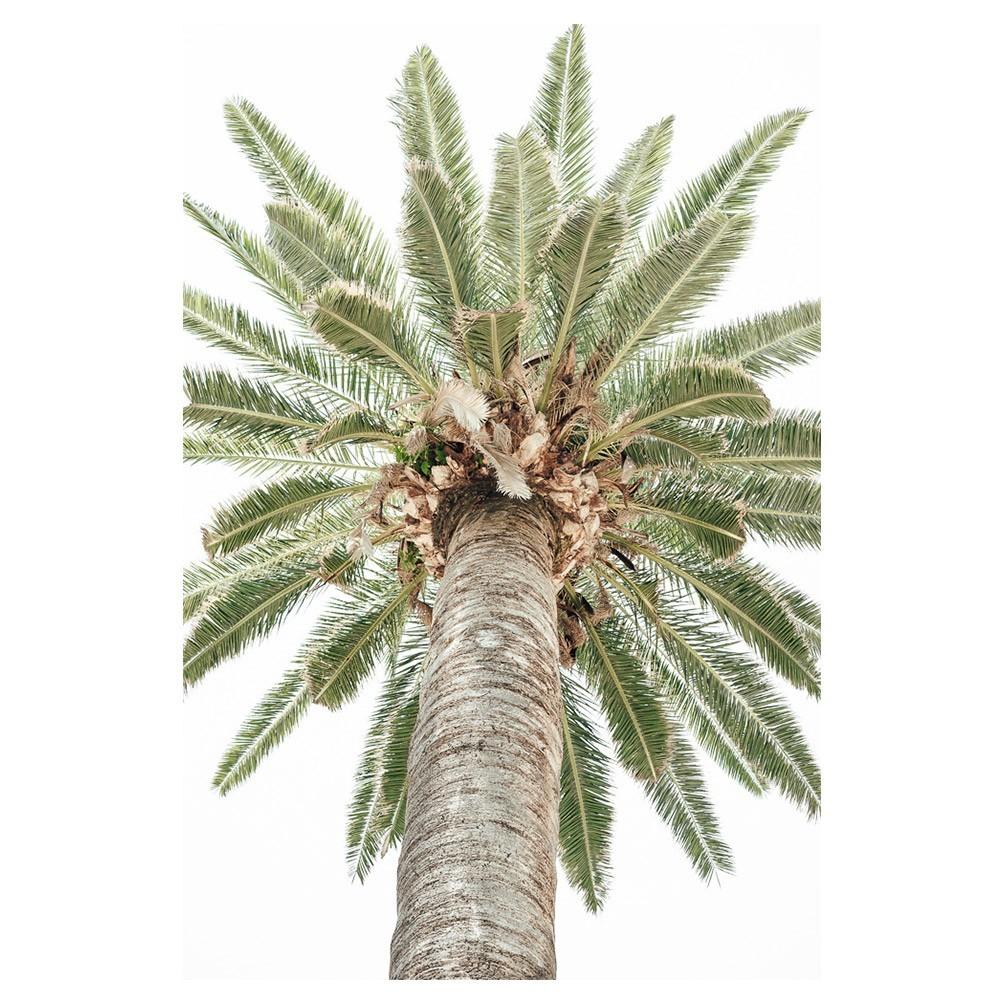 Vintage Palm Tree poster David & David Studio