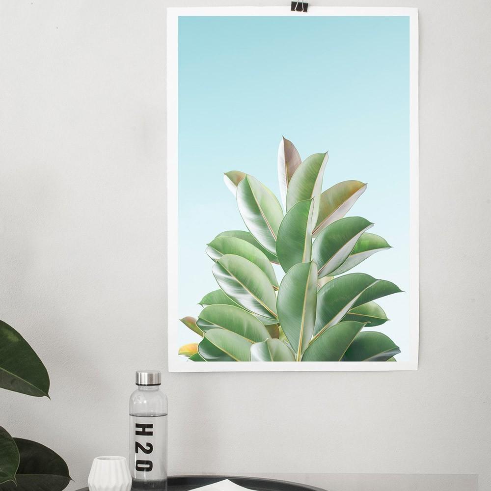 Ficus Elastica poster David & David Studio