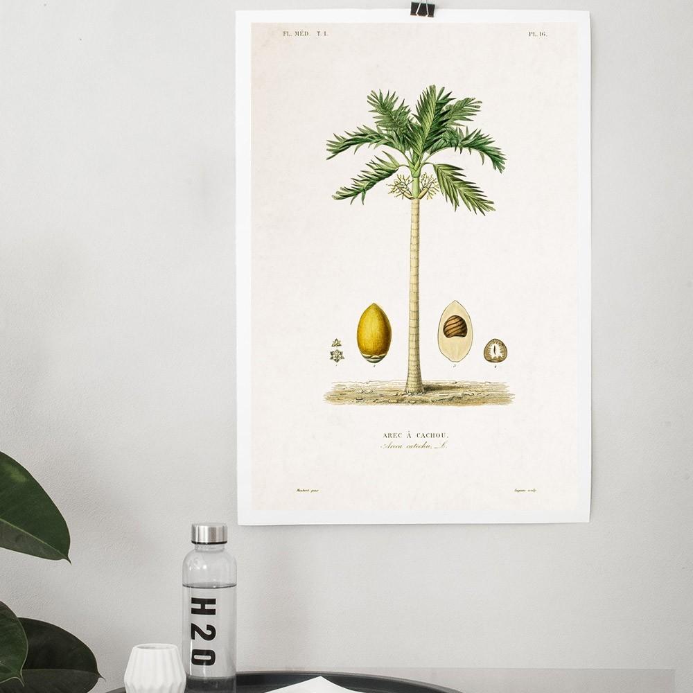 Planche Botanique - Palmier poster David & David Studio