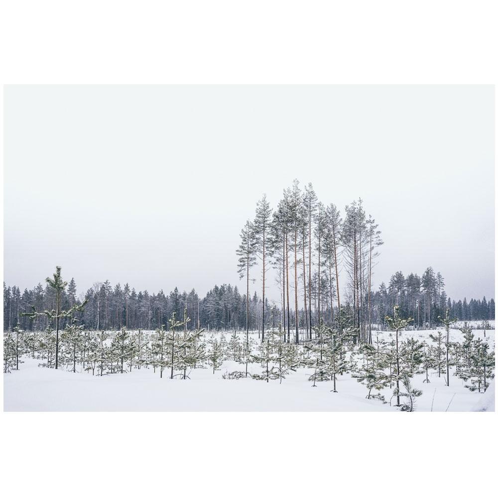 Landscapes of Finland N.1 poster David & David Studio